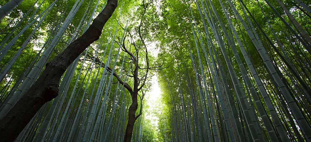 Aziende Ecosostenibili: Sterilfarma ed il progetto Natural Green® a sostegno dell'ambiente